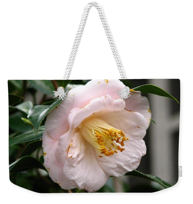 Camellia Weekender Tote Bag featuring the photograph Winter Bloom by J M Farris Photography