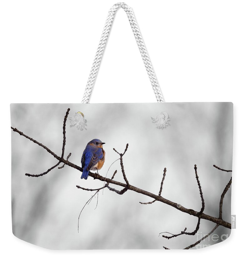 Bird Weekender Tote Bag featuring the photograph Winter Blues by Andre Vernacchia