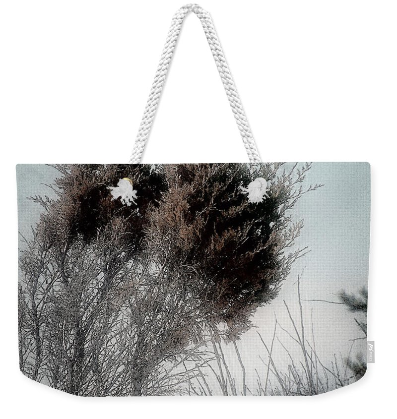 Beach Weekender Tote Bag featuring the painting Winter Cedar by RC DeWinter