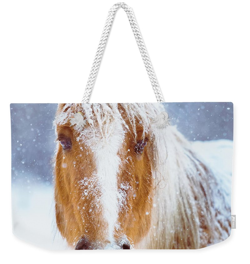 Winter Weekender Tote Bag featuring the photograph Winter Horse Portrait by Debi Bishop