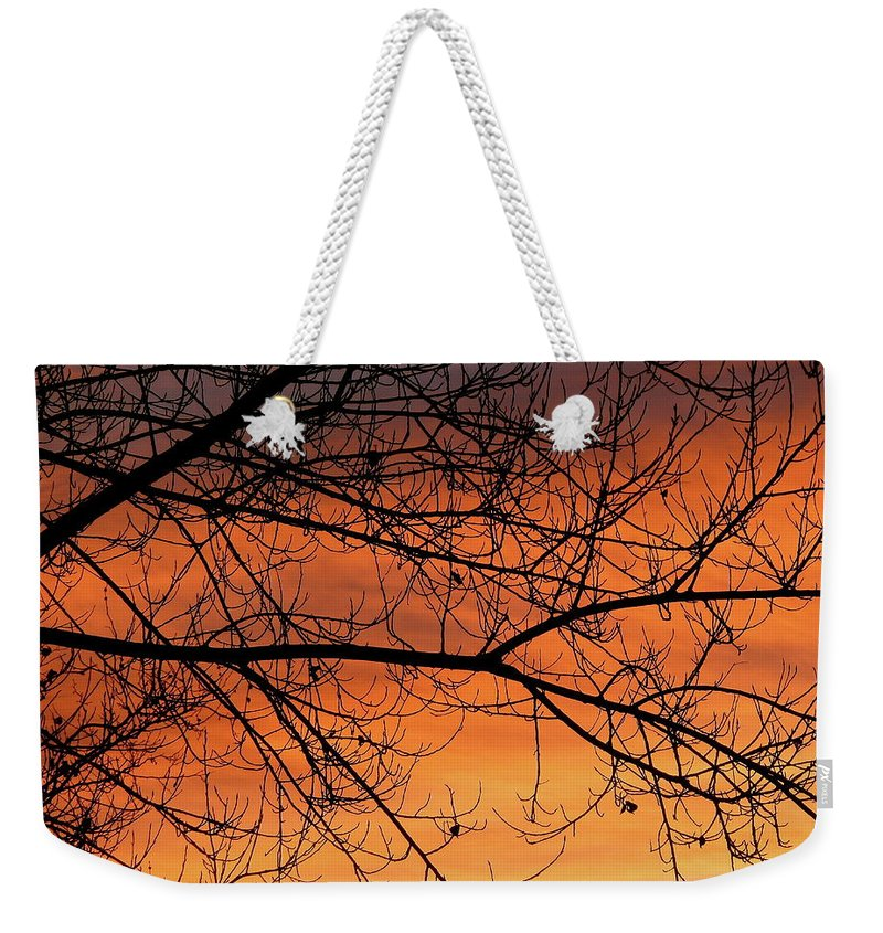 Tree Weekender Tote Bag featuring the photograph Winter Morning by Diana Hatcher