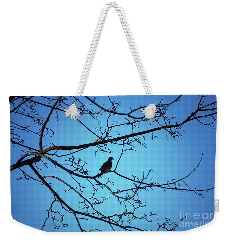 Mourning Dove Weekender Tote Bag featuring the photograph Winter Mourning by Faith Harron Boudreau
