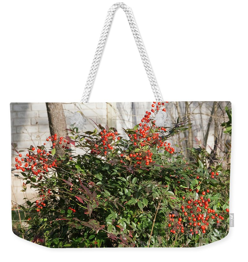 Plant Weekender Tote Bag featuring the photograph Winter Red Berries by Linda Phelps