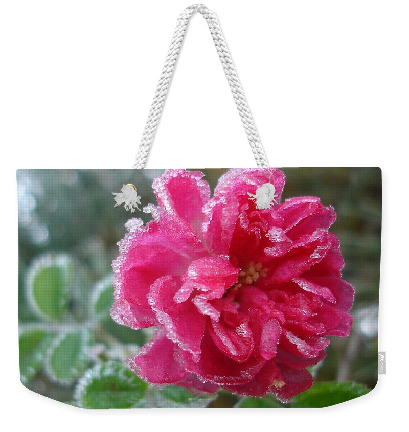 Rose Weekender Tote Bag featuring the photograph Winter Rose by Susan Baker