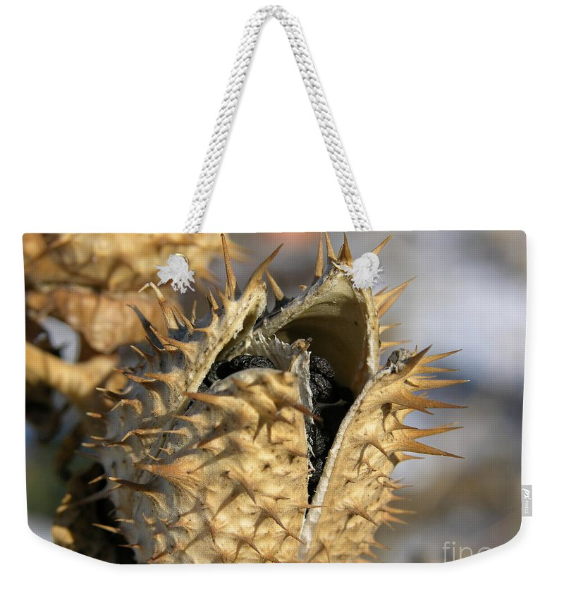 Winter Nature Weekender Tote Bag featuring the photograph Winter Seed Pod by Carol Groenen