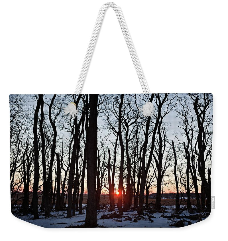 Tree Weekender Tote Bag featuring the photograph Winter Trees by Steve Gadomski