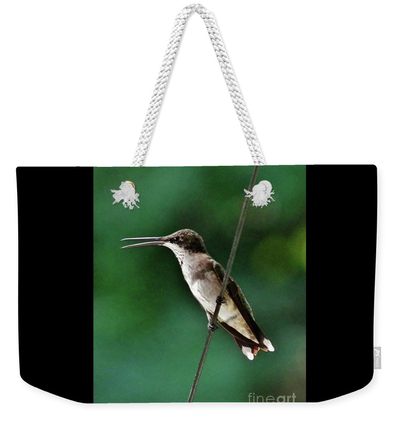 Wire Walker Young Male Ruby-throated Hummingbird Weekender Tote Bag featuring the photograph Wire Walker Young Male Ruby-throated Hummingbird  by Earl Williams Jr