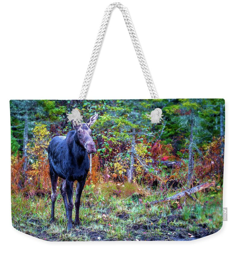 Maine Weekender Tote Bag featuring the photograph Wise And Strong by Mary Koenig Godfrey