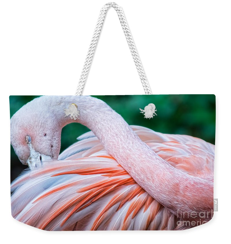 Flamingo Weekender Tote Bag featuring the photograph With Grace by Gaby Swanson
