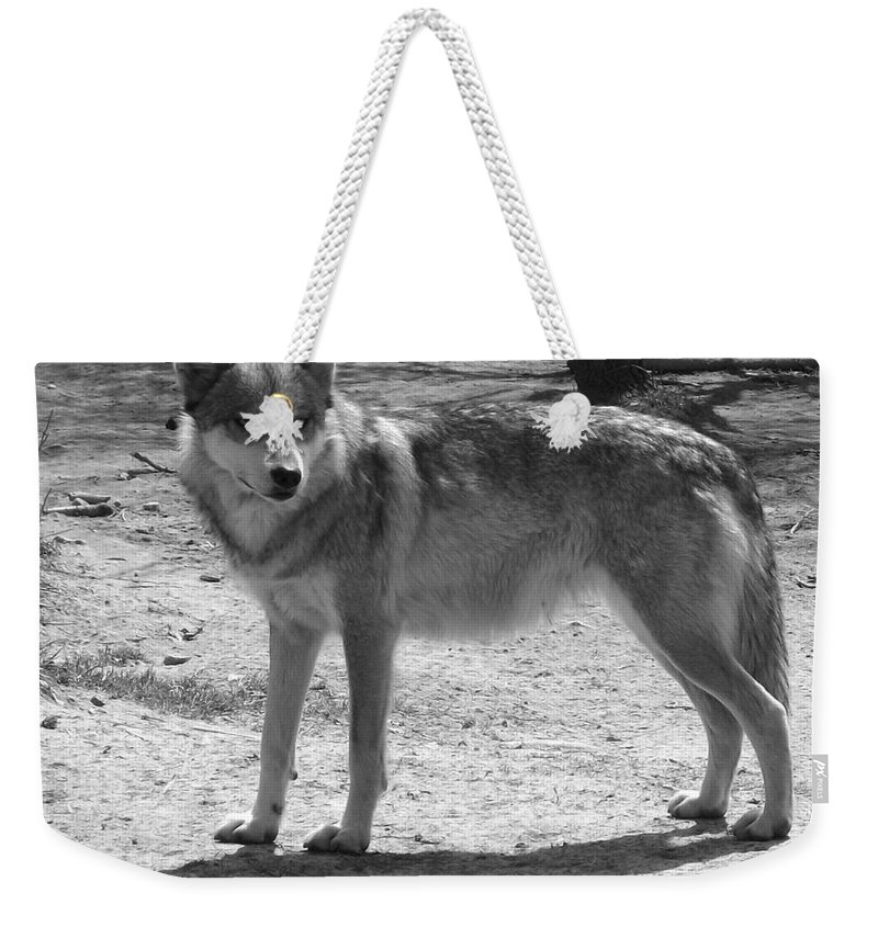 Mexican Wolf Weekender Tote Bag featuring the photograph Wolf Pride by Sara Raber