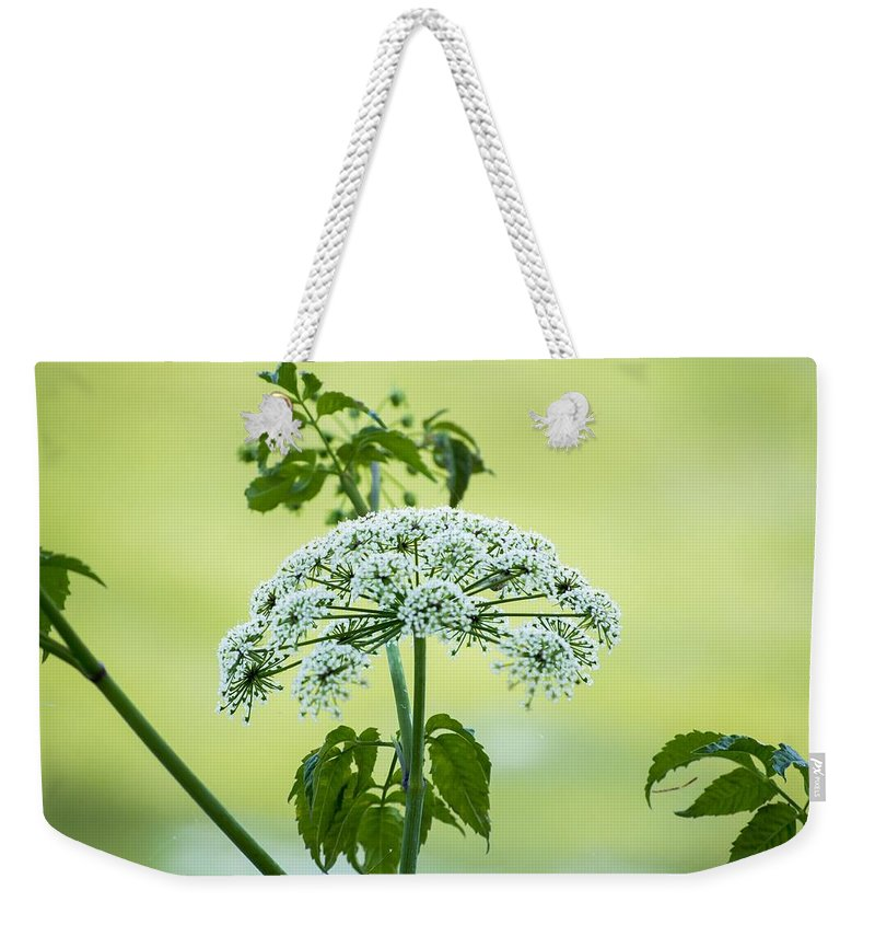 Florida Weekender Tote Bag featuring the photograph Wonder by Kari Tedrick