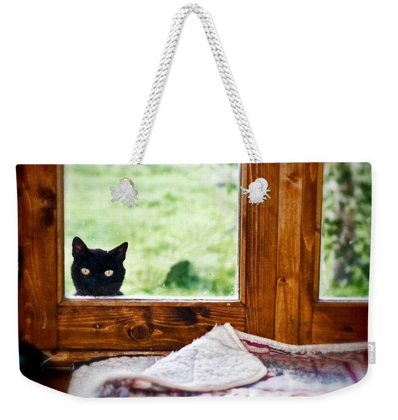 Animal Weekender Tote Bag featuring the photograph Wondering What's She... Better Investigate by Silvia Ganora