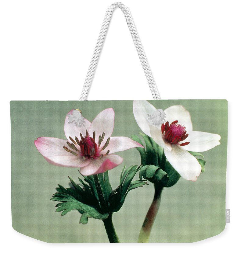 Flower Weekender Tote Bag featuring the photograph Wood Anemone by American School