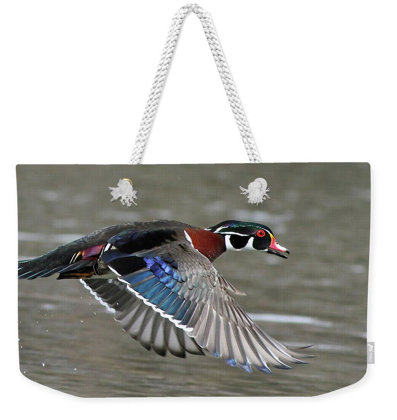 Aix Weekender Tote Bag featuring the photograph Wood Duck In Action by Mircea Costina Photography