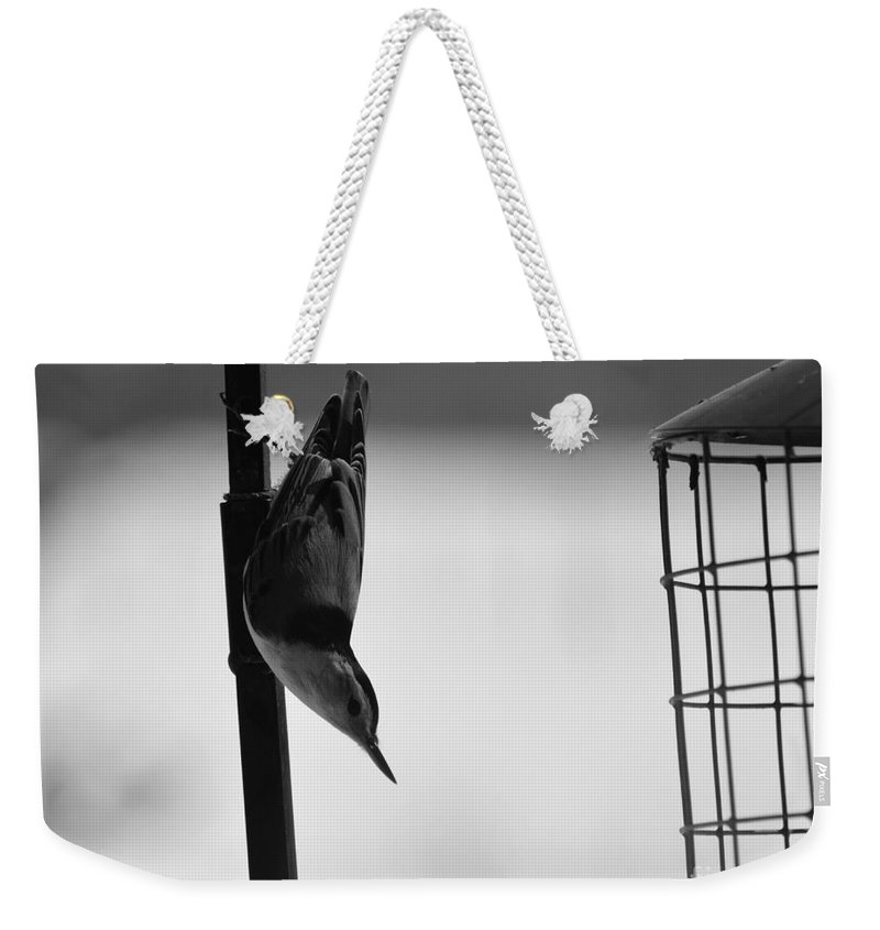 Birds Weekender Tote Bag featuring the photograph Wood Pecker by Robert Scifo