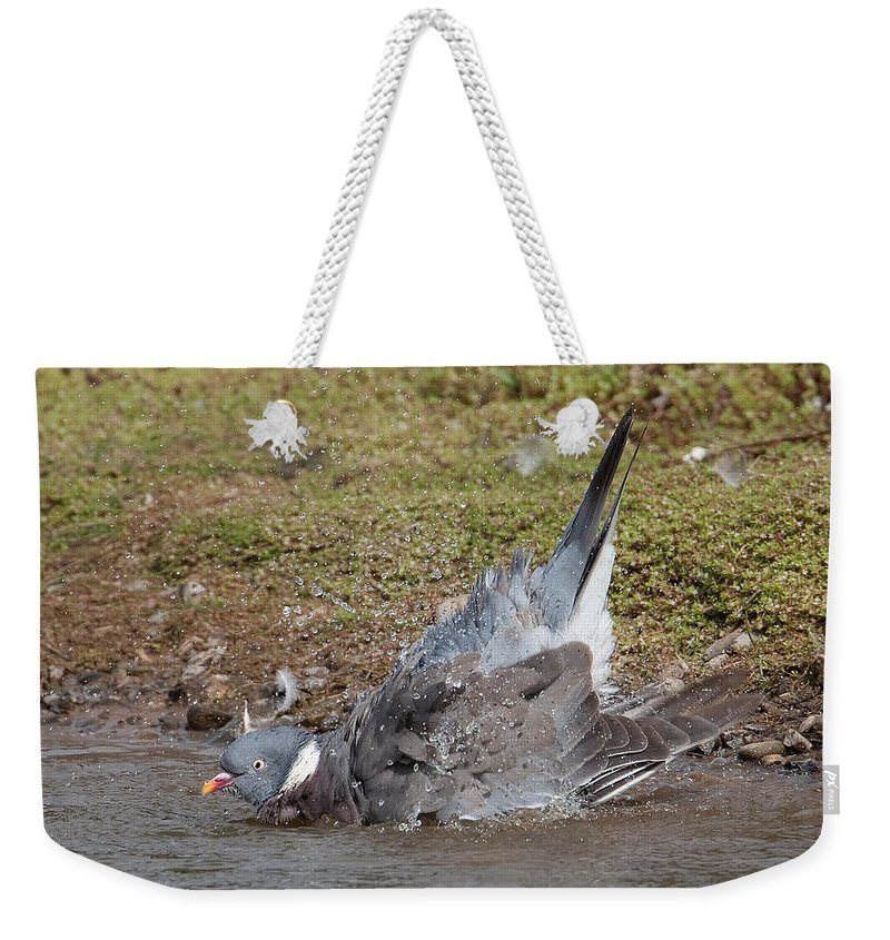 Wood Pieon Weekender Tote Bag featuring the photograph Wood Pigeon Washing by Bob Kemp