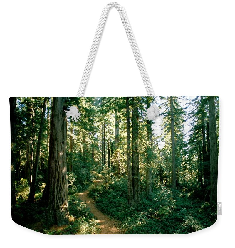 Long Meadow Sequoia Grove Weekender Tote Bag featuring the photograph Woodland Path Winding Through A Grove by James P. Blair
