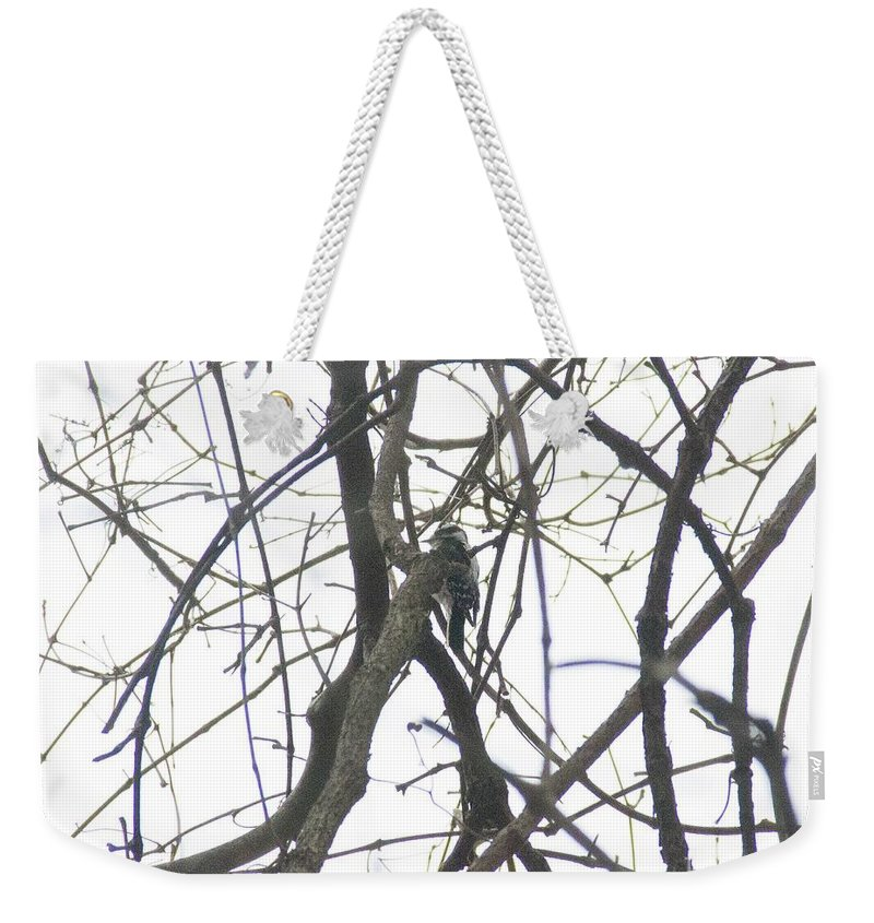 Woodpecker Weekender Tote Bag featuring the photograph Woodpecker In The Forest by Rebecca Pavelka