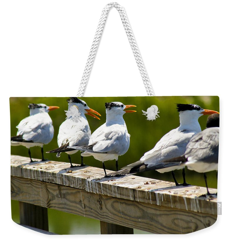 Bird Weekender Tote Bag featuring the photograph Yackety Yackety by Marilyn Hunt