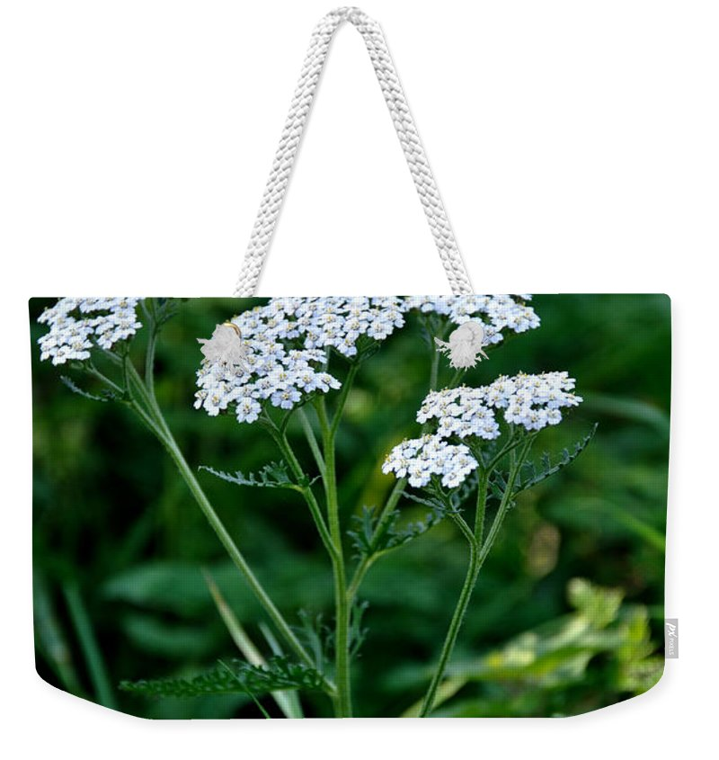 Stapenhill Weekender Tote Bag featuring the photograph Yarrow Flowerheads by Rod Johnson