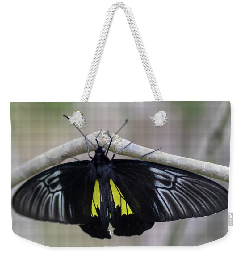 Butterfly Weekender Tote Bag featuring the photograph Yellow And Black Butterfly by Raphael Lopez