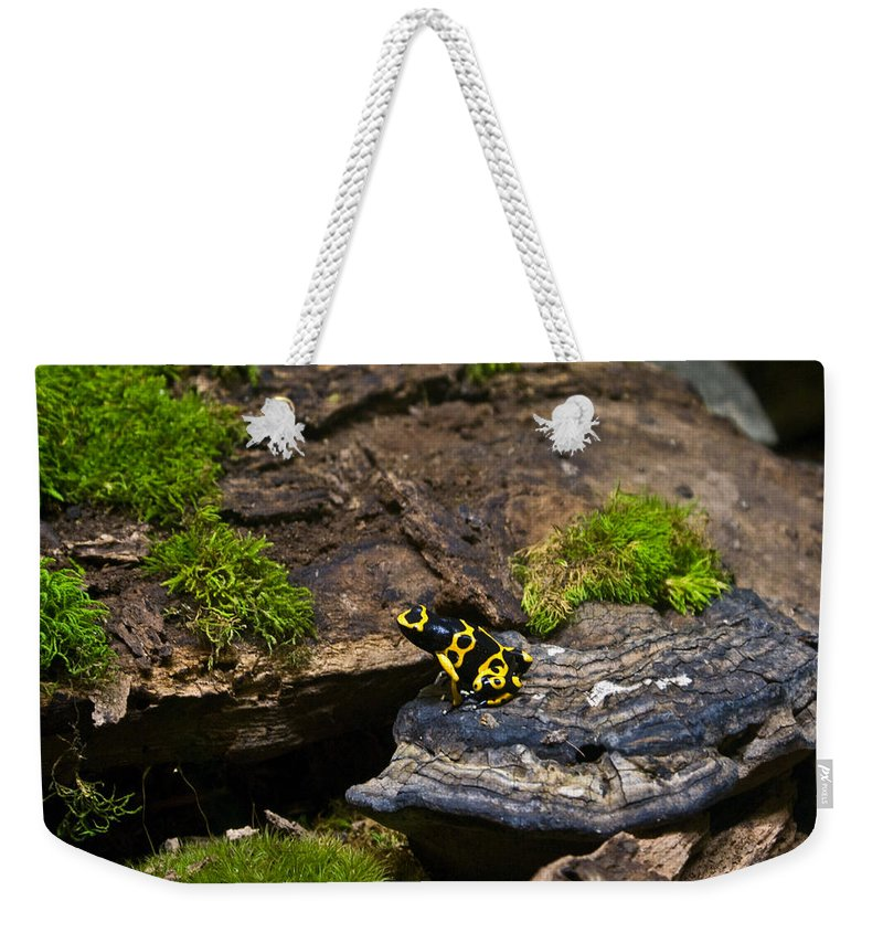 Black Weekender Tote Bag featuring the photograph Yellow And Black Dart Frog by Douglas Barnett