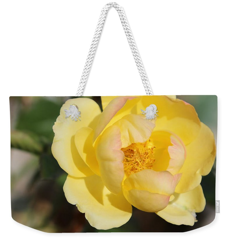 Yellow Rose Weekender Tote Bag featuring the photograph Yellow And Pink Tipped Rose by Theresa Campbell