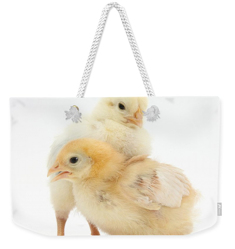 Nature Weekender Tote Bag featuring the photograph Yellow Bantam Chicks by Mark Taylor