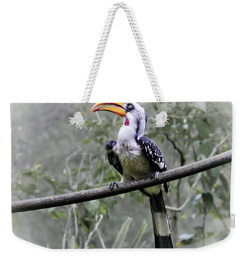 Brevard Zoo Weekender Tote Bag featuring the photograph Yellow Billed Hornbill by Roger Wedegis