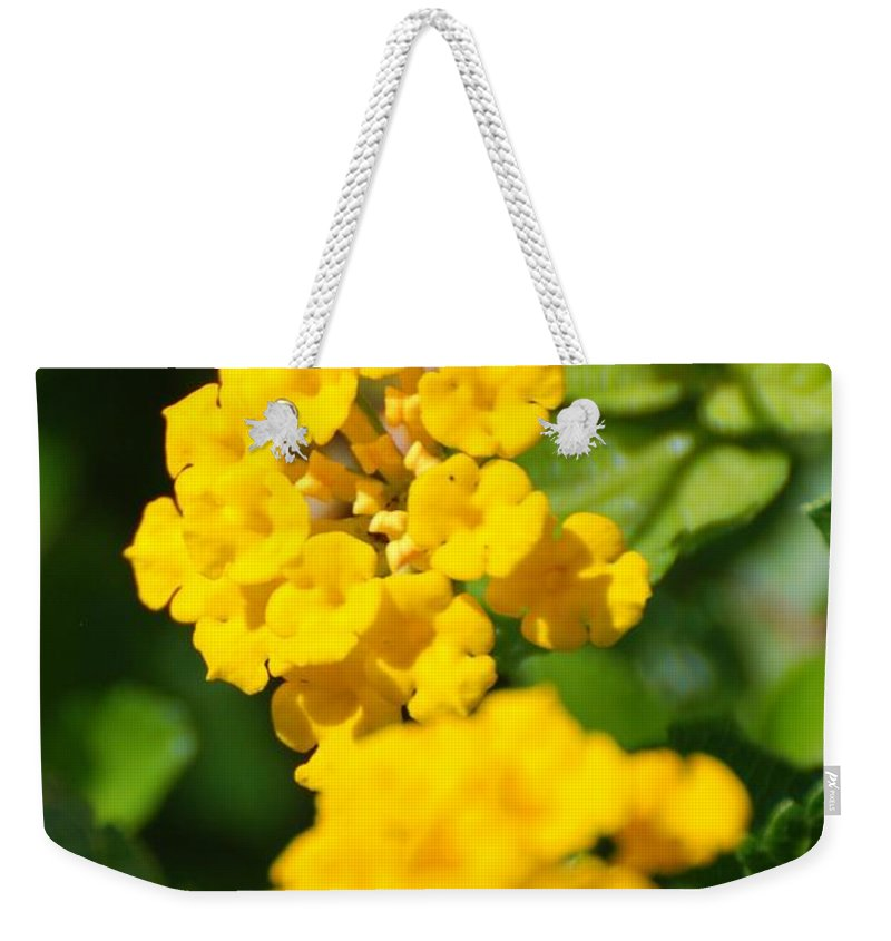 Flowers Weekender Tote Bag featuring the photograph Yellow Blooms by Rob Hans