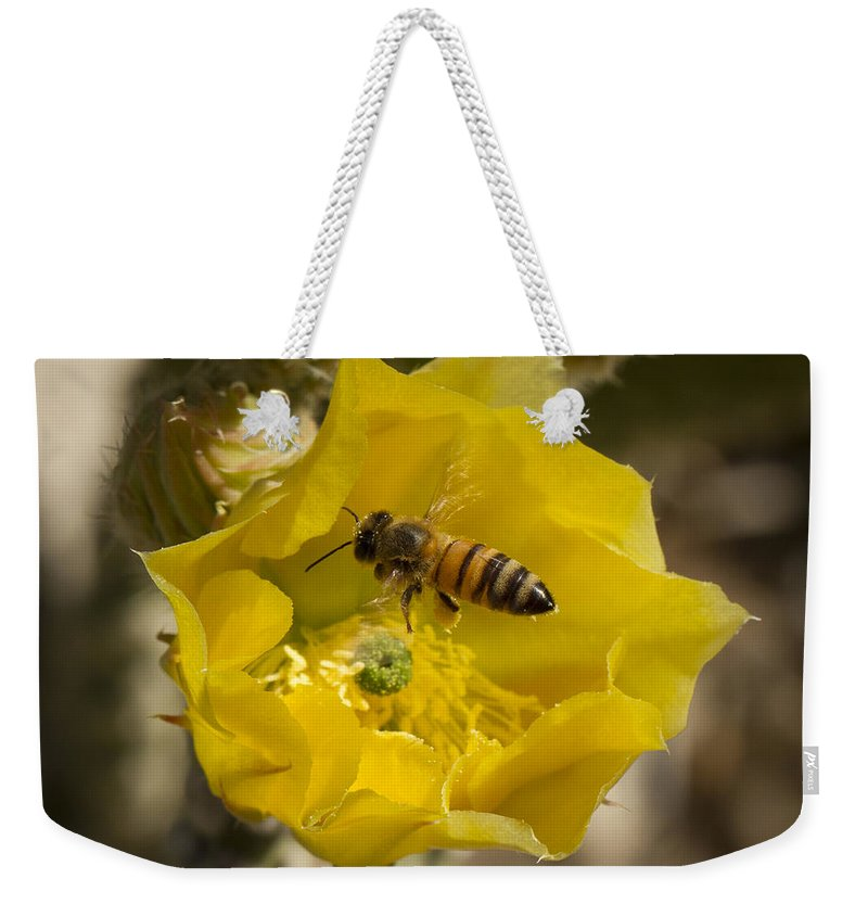 Jean Noren Weekender Tote Bag featuring the photograph Yellow Cactus Flower With Wasp by Jean Noren