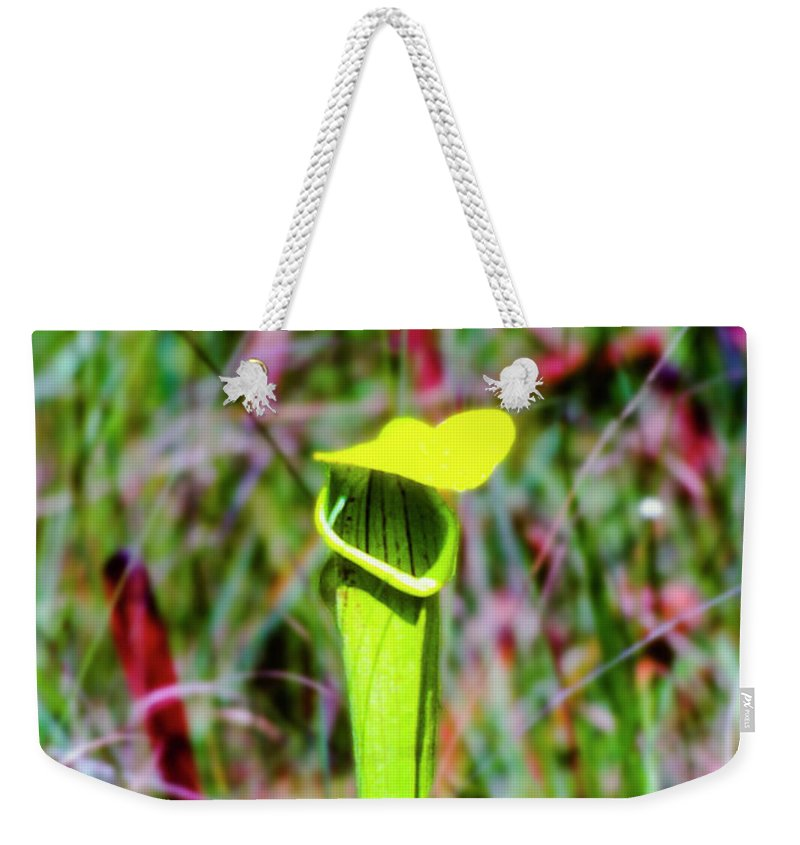 Big Thicket National Preserve Weekender Tote Bag featuring the photograph Yellow Cap by Bob Phillips