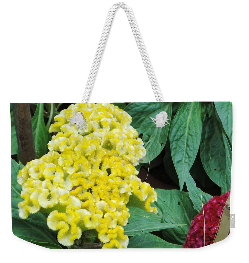 Weekender Tote Bag featuring the photograph Yellow Cockscomb by Usha Shantharam