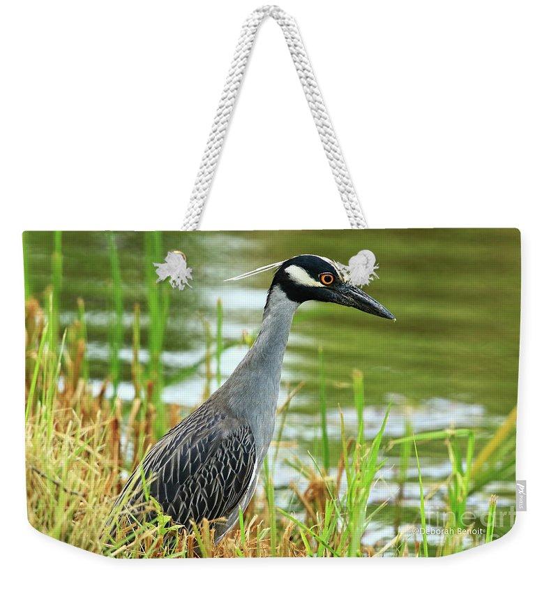 Night Heron Weekender Tote Bag featuring the photograph Yellow Crowned Night Heron by Deborah Benoit