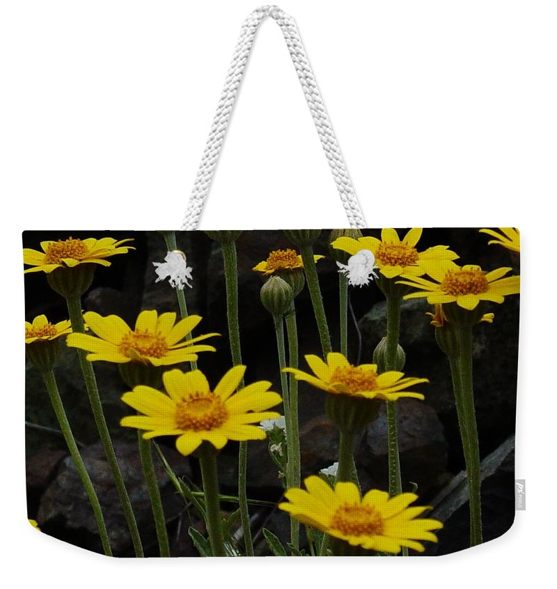 Yellow Weekender Tote Bag featuring the photograph Yellow Daisies by Sara Stevenson