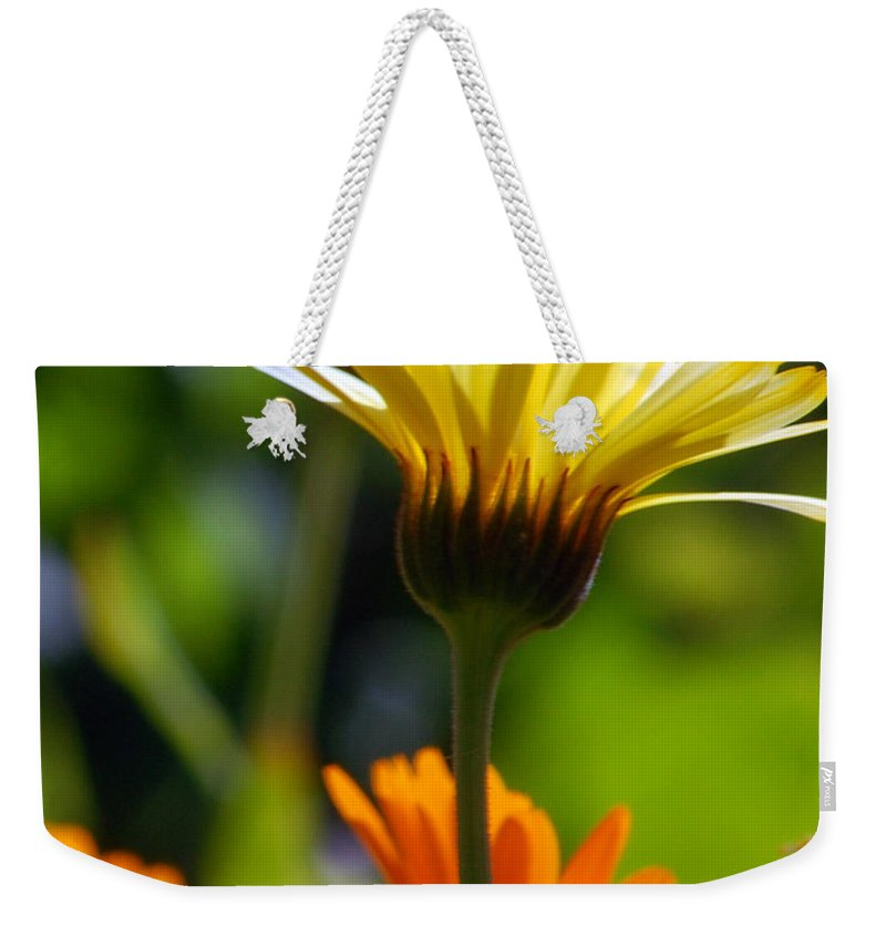 Daisy Weekender Tote Bag featuring the photograph Yellow Daisy by Amy Fose