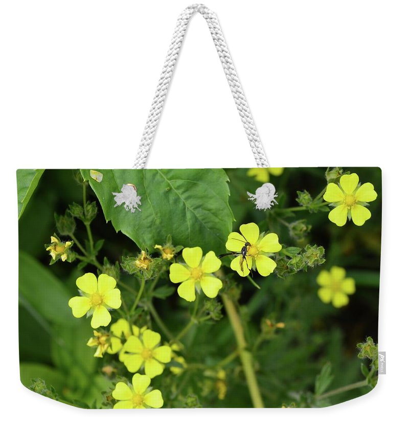 Nature Weekender Tote Bag featuring the photograph Yellow Flower And A Black Bug by Lyle Crump