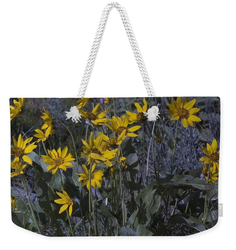 Yellow Flowesr Weekender Tote Bag featuring the photograph Yellow Flowers by Sara Stevenson