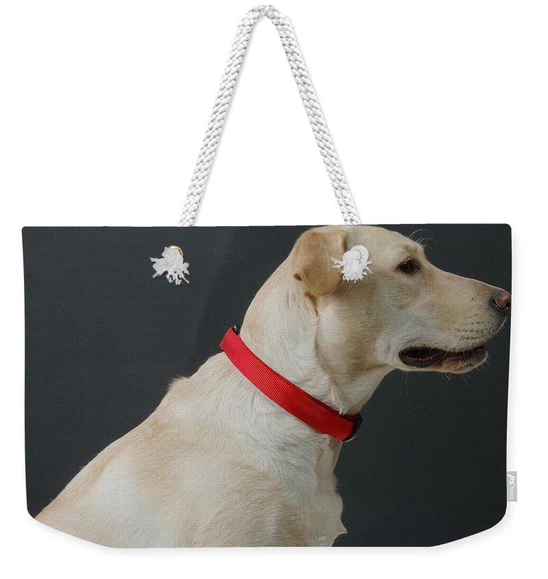 Dog Weekender Tote Bag featuring the photograph Yellow Lab by Jerry McElroy
