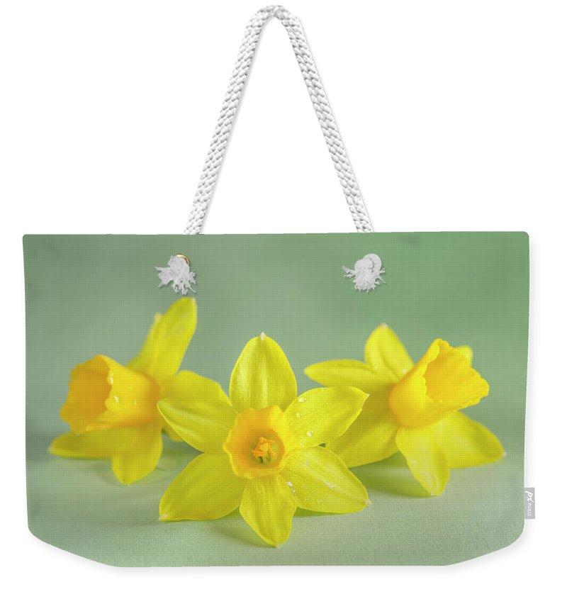 Yellow Mini Narcissus Weekender Tote Bag featuring the photograph Yellow Mini Narcissus On Green 2 by Iris Richardson