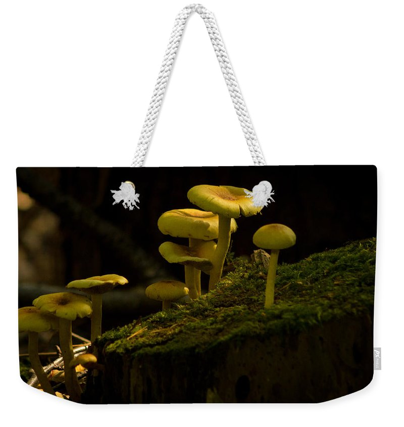 Mushrooms Weekender Tote Bag featuring the photograph Yellow Mushrooms by Dr Charles Ott
