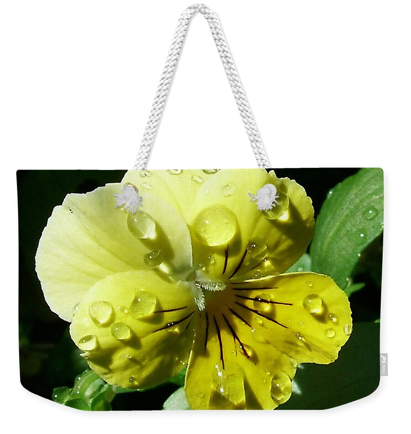 Flower Weekender Tote Bag featuring the photograph Yellow Pansy by Anthony Jones