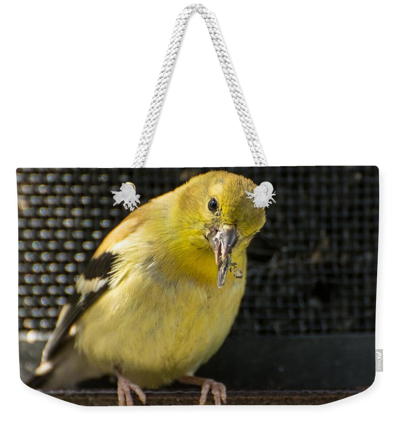Bird Weekender Tote Bag featuring the photograph Lesser Female Goldfinch Having Lunch by Constance Puttkemery