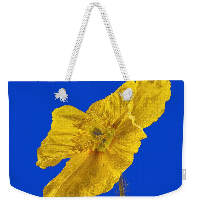 Color Weekender Tote Bag featuring the photograph Yellow Poppy On Blue Background by Jean Noren