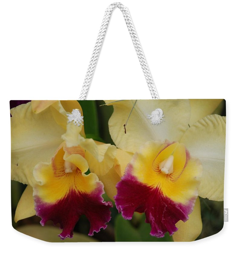 Macro Weekender Tote Bag featuring the photograph Yellow Purple Orchids by Rob Hans