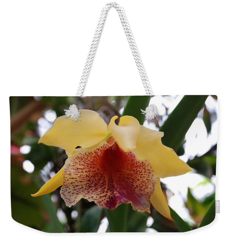 Macro Weekender Tote Bag featuring the photograph Yellow Red Orchid by Rob Hans