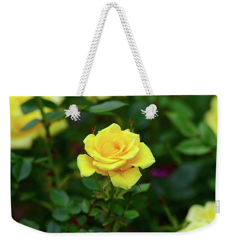 Rose Roses Yellow Bloom Flower Flowers Garden Spring Weekender Tote Bag featuring the photograph Yellow Roses by Clyn Robinson