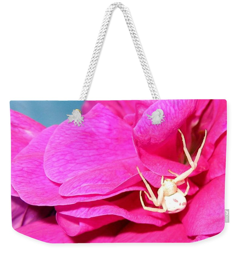 Spider Weekender Tote Bag featuring the photograph Yellow Spider by Will Borden