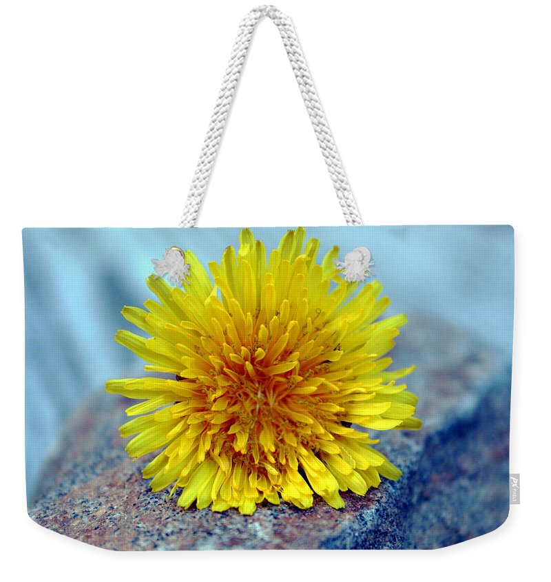 Flower Wild Nature Yellow Rock Blue Spring Macro Close Up Weekender Tote Bag featuring the photograph Yellow Spring by Linda Sannuti