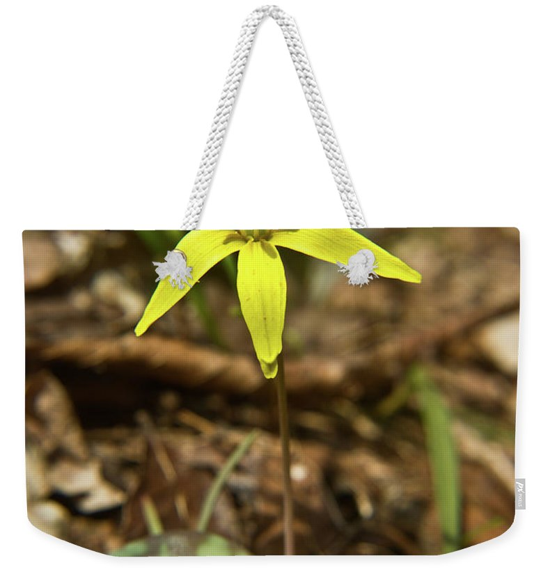 Erythronium Americanum Weekender Tote Bag featuring the photograph Yellow Trout Lily 1 by Douglas Barnett
